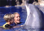 play with the dolphins